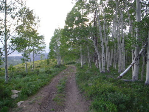 Beautiful trails and aspens make up the majority of the return run.