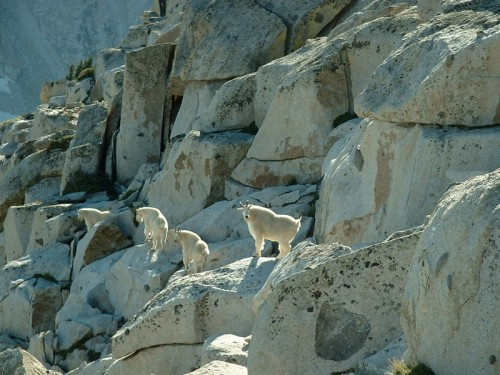 Mountain Goats on South Thunder