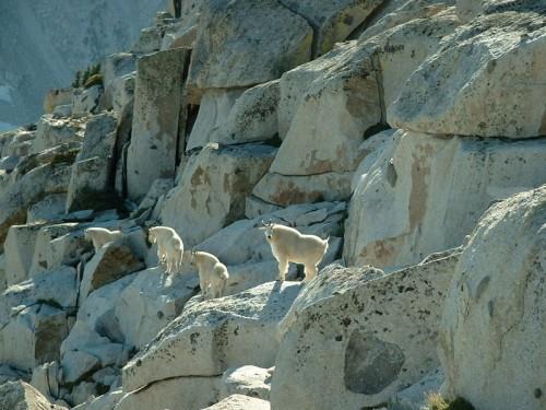 Mountain Goats on South Thunder